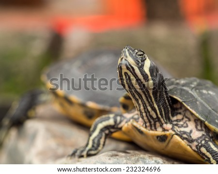 Small turtle staring up in a smart pose - stock photo