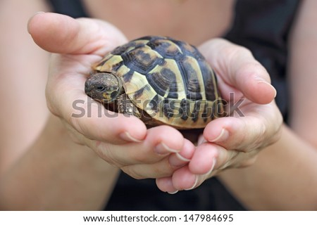 Small turtles, pet in the hands of girls
