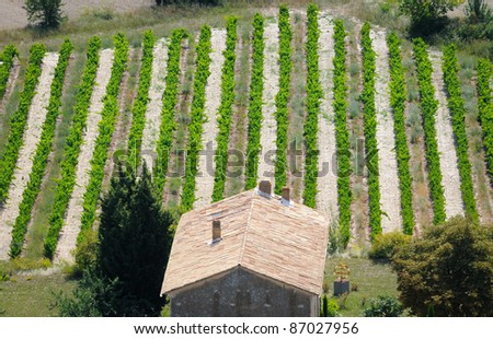 small vineyard in front of stone hut in Gordes town, Vaucluse department, Provence region in France - stock photo
