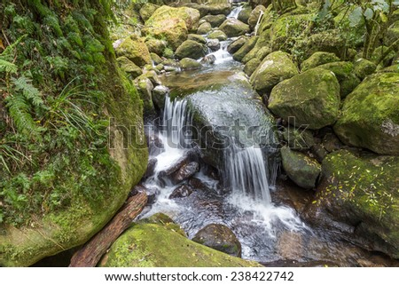Small waterfall on green mossy rocks. Taken in Kaimai forest park, Waikato, New Zealand - stock photo