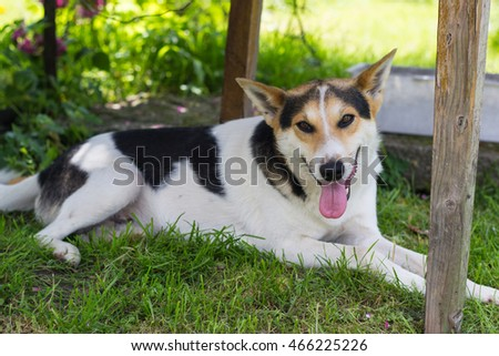 small white and black dog in green summer garden
