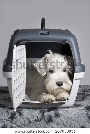Small white dog sitting in his transporter pet carrier and waiting for a trip - stock photo