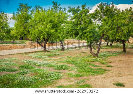 small white flowers and green trees in spring at Valley of the Temples, Sicily - stock photo