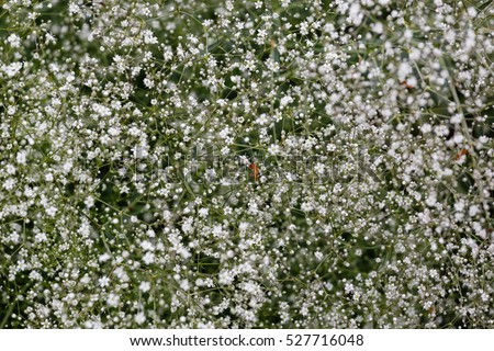 Small white flowers garden russia photo stock photo royalty free small white flowers in a garden russia photo mightylinksfo