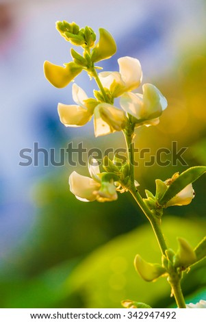 Small white flowers on the tree - stock photo
