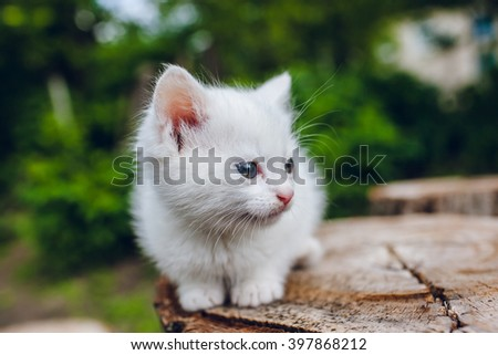 small white kitten outdoors
