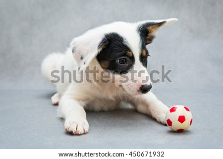 Small white puppy and a toy soccer ball
