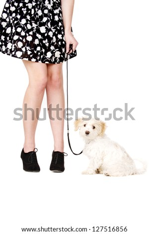 Small white puppy being held with a lead sat next to a woman's legs looking at the camera - stock photo