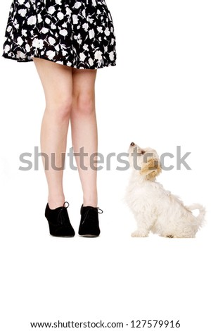 Small white puppy sat next to a woman's legs looking up at her isolated on a white background - stock photo