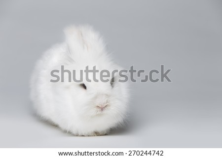 small white rabbit in studio on light background - stock photo