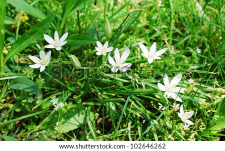 Small white spring flowers grass stock photo edit now 102646262 small white spring flowers in the grass mightylinksfo