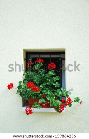 Small window is decorated with the red geranium flowering on the white wall.
