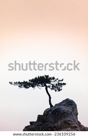Small windswept conifer on a unique rock at warm evening light/Silence - A Little Tree on a Little Rock - stock photo
