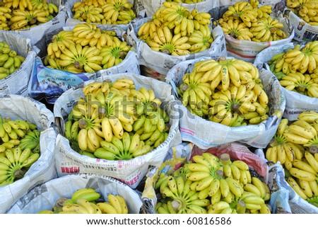 Small yellow bananas at Thai market - stock photo
