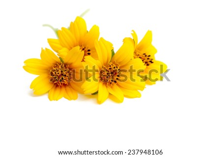 Small yellow flower on a white background.
