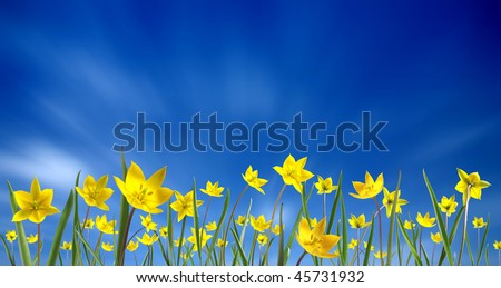 Small yellow tulips, isolated on blue sky - stock photo