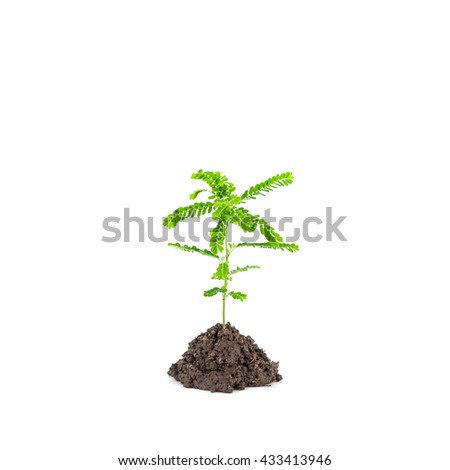 Small young green plant on white background, Depending on the soil pile  - stock photo