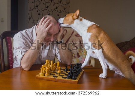 Smart basenji dog desperately trying to calm down its opponent licking him during chess family tournament - stock photo