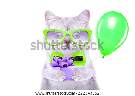 Smart beautiful british cat with a gift box. Funny animals. Trendy cat dressed in beautiful clothes - stock photo