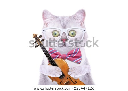 Smart beautiful british cat with a old violin. Funny animals. Trendy cat dressed in beautiful clothes - stock photo