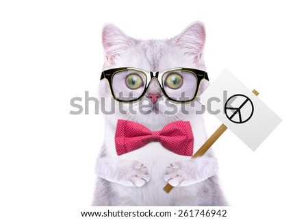 Smart beautiful british cat with a peace symbol. Funny animals. Trendy cat dressed in beautiful clothes - stock photo