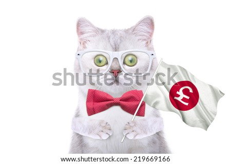 Smart beautiful british cat with a pound icon. Funny animals. Trendy cat dressed in beautiful clothes - stock photo