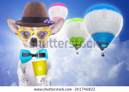 Smart beautiful dog chihuahua with a cup. Funny animals. Fashionable dog dressed in beautiful clothes - stock photo
