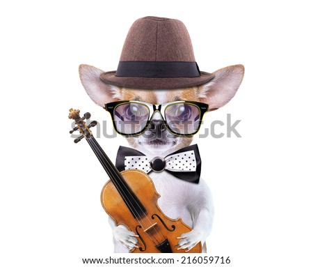 Smart beautiful dog chihuahua with a old violin. Funny animals. Fashionable dog dressed in beautiful clothes - stock photo
