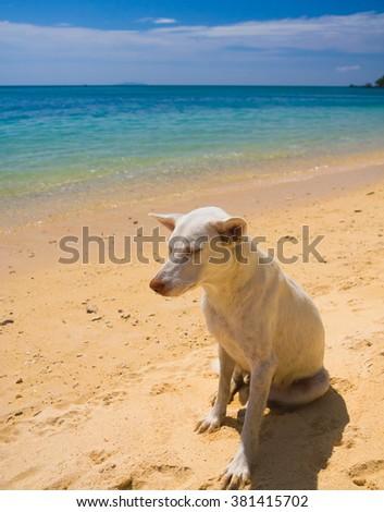 Smart Eyes Salty Sea Dog  - stock photo