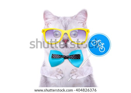 Smart handsome cat with icon bike. Funny animals. Trendy cat dressed in beautiful clothes - stock photo