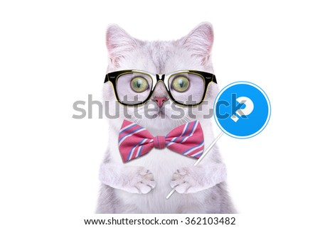 Smart handsome cat with icon question. Funny animals. Trendy cat dressed in beautiful clothes - stock photo