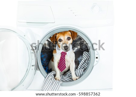 Most Inspiring Smart Beagle Adorable Dog - stock-photo-smart-laundry-and-dry-cleaning-pet-service-cleaning-of-suits-and-shirts-funny-dog-inside-washing-598857362  Picture_789425  .jpg