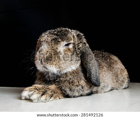 Smart senior rabbits relaxing, shallow depth of field focus on eye - stock photo