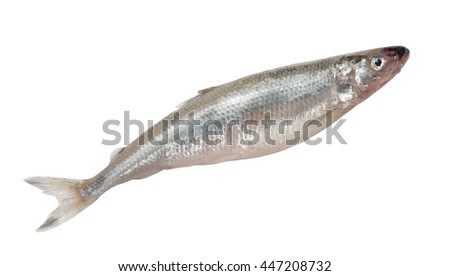 Smelt fish isolated on white background - stock photo