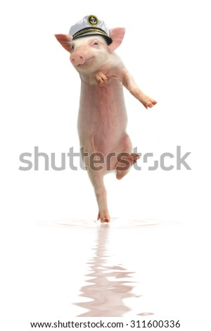 Smile a pig on hind legs walking on water - stock photo
