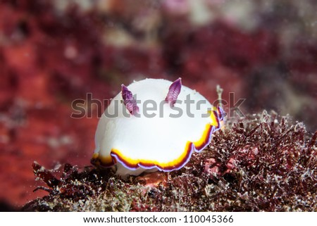smile face of sea slug - stock photo