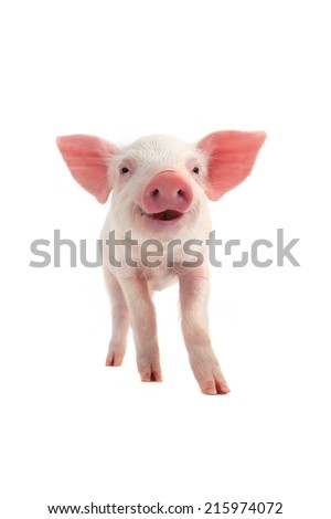 smile pig on a white background. soft focus - stock photo