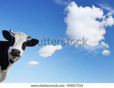 Smiling cow and blue sky with shaped clouds - stock photo