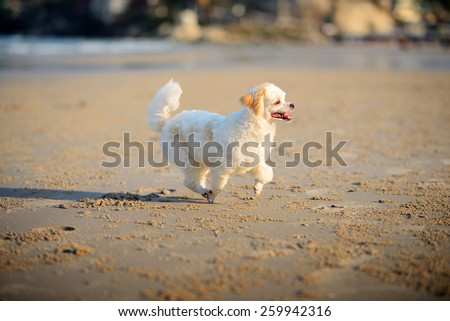 smiling cute white dog on the beach - stock photo