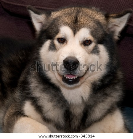 Smiling dog - stock photo