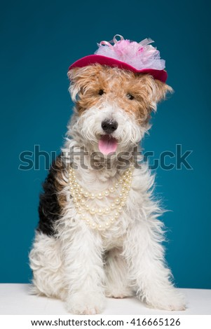 smiling dog breed Fox Terrier on a blue background