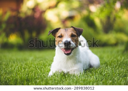 Smiling dog on a lawn - stock photo