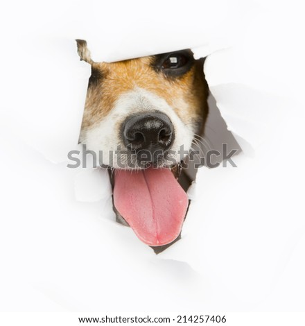 smiling face of a dog with tongue sticking out of a hole in the white paper. Empty space for your text - stock photo