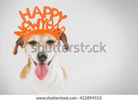 Smiling laughing pretty dog. Happy new year card ideas.  Grey ( gray ) background orange word on the head.  - stock photo
