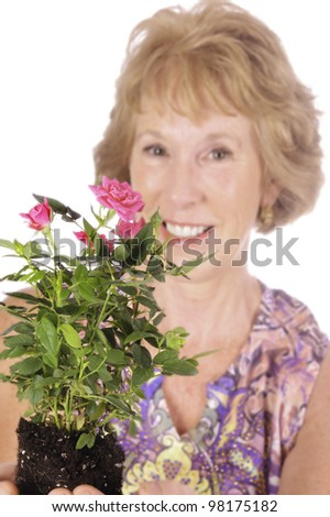 smiling middle-aged woman holding a rose plant ready to put in garden, isolated over white - stock photo