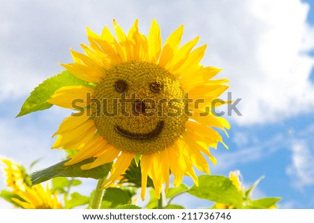 Smiling sunflower in summer - stock photo