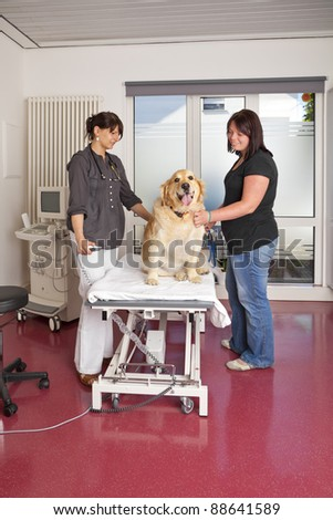 smiling veterinarian preparing a golden retriever for an ultrasonic examination - stock photo