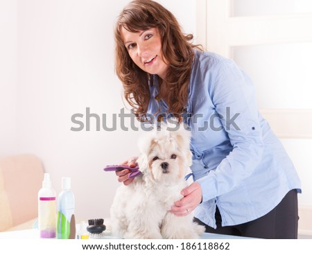 Smiling woman grooming a dog purebreed maltese. Focus intentionally left on dog - stock photo