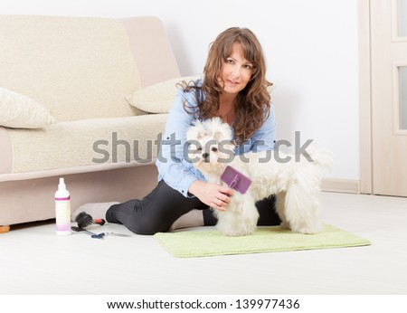Smiling woman grooming a dog purebreed maltese on the floor at home - stock photo