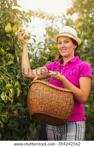 Smiling woman standing with basket of organic pears in a orchard.